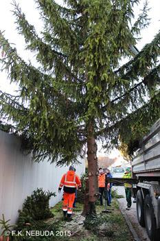 Weihnachtsbaum Natürlich.Weihnachtsbaum Aus Gumpi Für Gumpi 01 Offizielle Homepage Der